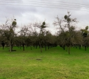 View to neighbouring orchard
