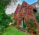 Rear door to garden surrounded by Virginia Creeper