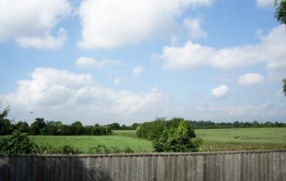 View beyond garden
