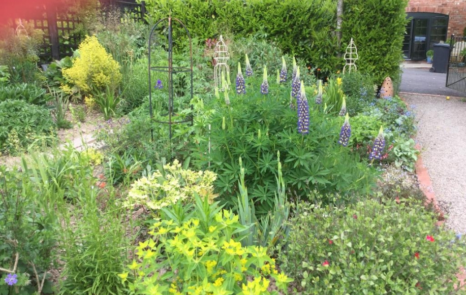 Garden in May/June 2020 (provided by vendor)