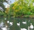 Wycombes` River Wye