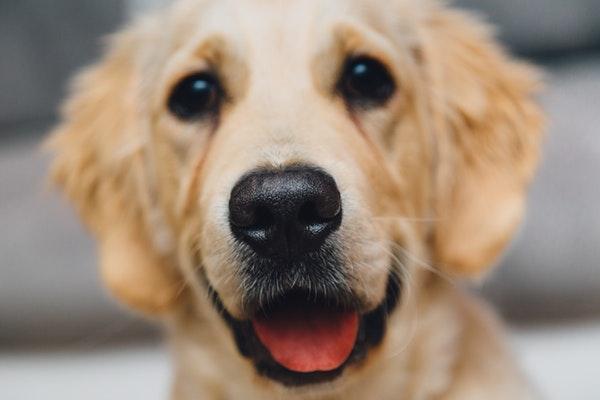 friendly pet